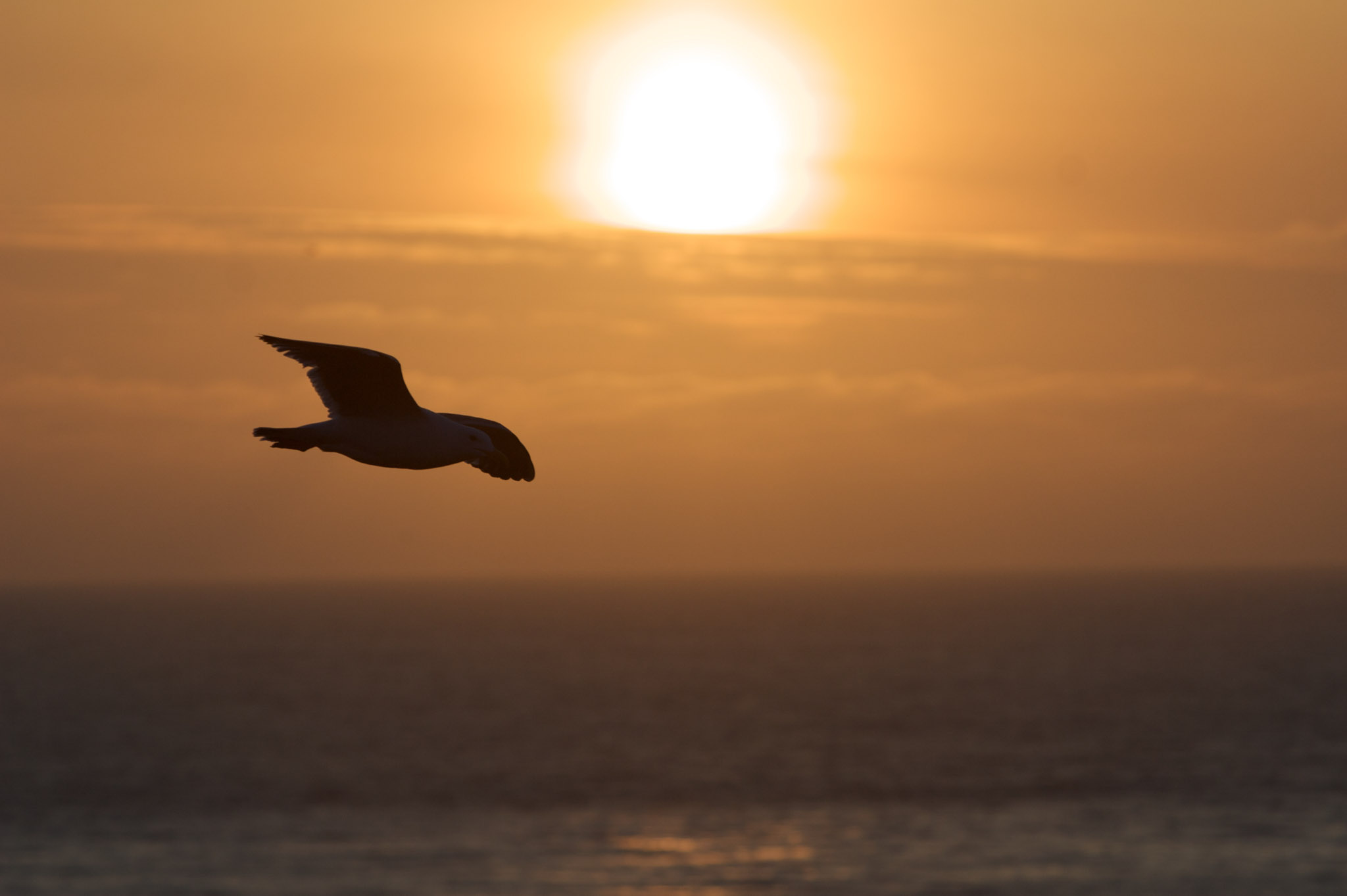 A bird flying by the sunset