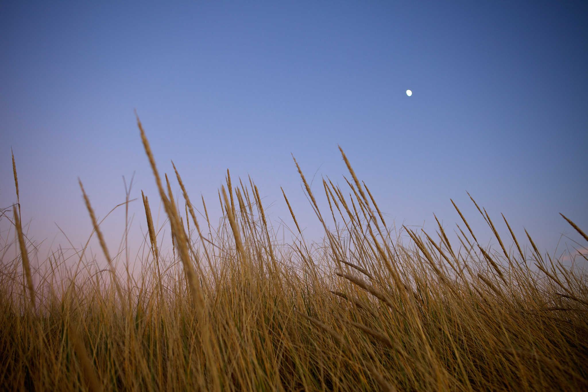 Moonlit dunes in Seaside
